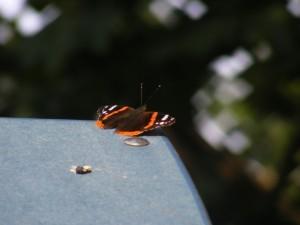 Fluture 4